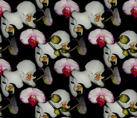 Orchid Ewe Knot Black fabric by peacoquettedesigns on Spoonflower - custom fabric