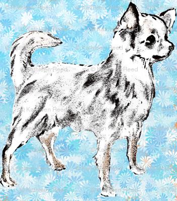Chihuahua on Aqua Background fabric