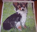 Rrlongcoat_chihuahua_comment_104122_thumb