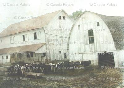 Amish_Dairy