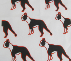 Black, White and Red all over Boston Terrier