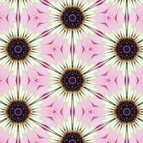 Iceplant pattern