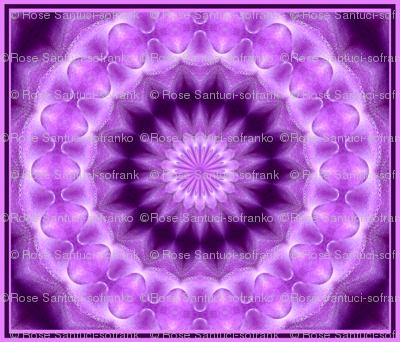 Orchid Kaleidoscope