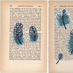 feathers on book pages