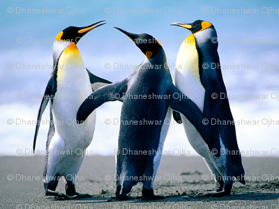 Rrpenguins_preview