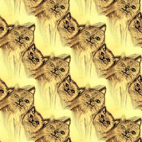 Rrrrrrrcats_may_and_mia1_shop_preview