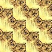 Rrrrrrrcats_may_and_mia1_shop_thumb