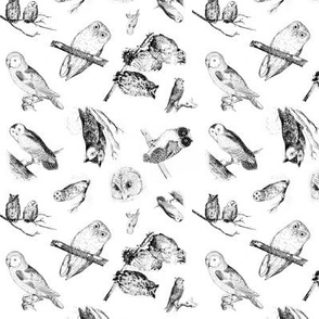 Vintage Owls - Black and White