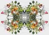 trumpet-vine fabric by wren_leyland on Spoonflower - custom fabric