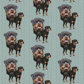 Rottweiler fabric