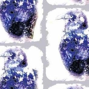 Raven S