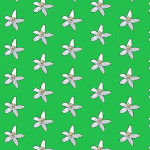 Orange Blossoms on green