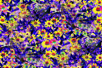 Field_of_Flowers