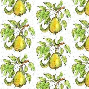 Summer Pear