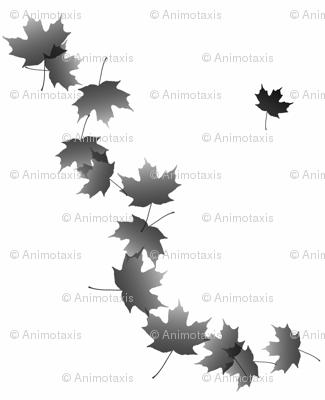 Maple Leaf Cascade 5, L
