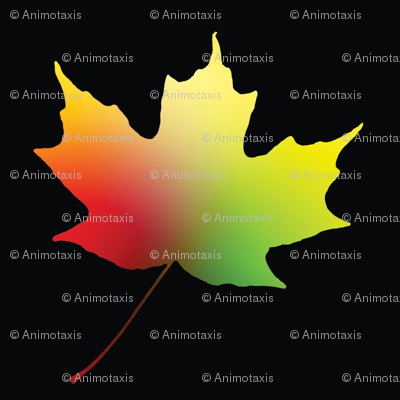 Rainbow Maple Leaf, L