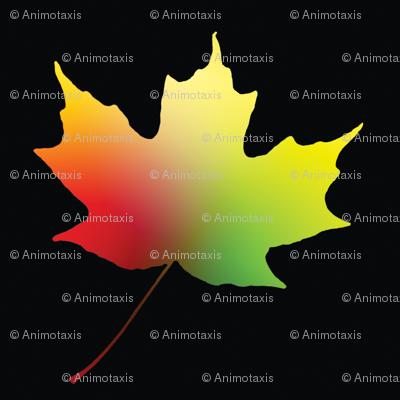 Rainbow Maple Leaf, S