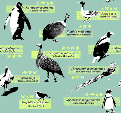 The Zoology of Exotic Birds