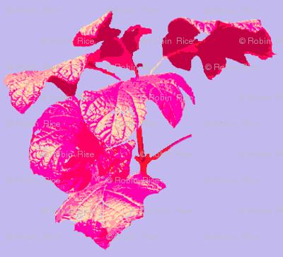 Ivy Leaf Check