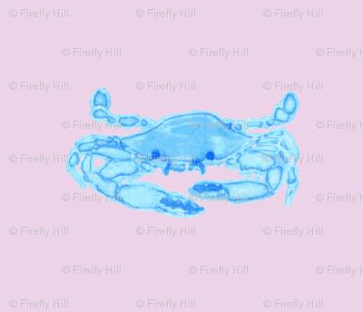 Blue Crab on pinkish lavender