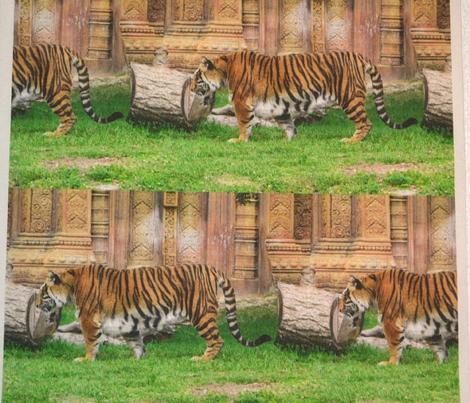 Tiger Stripe 2