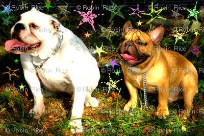 Bella and Bandit Watch Fireworks II