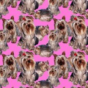 Rrrrrpink_yorkies_shop_thumb