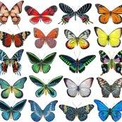 Rrrrrall_butterflies_lined_up_copy_shop_thumb