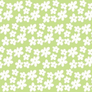 Apple Green Daisy Flowers