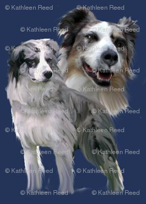 Blue Merle Australian Shepherds  fabric