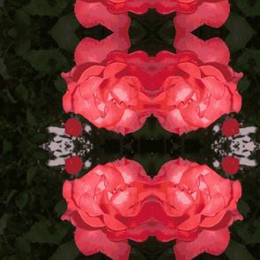Leland Rose-ch
