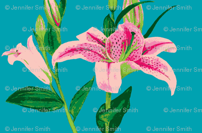 Asiatic Lily 8color