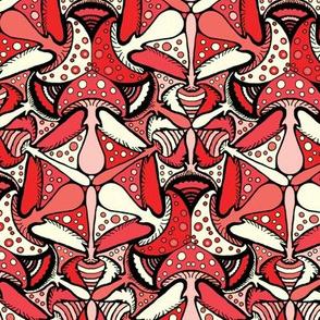 Amanita muscaria - Upto 1 Yard
