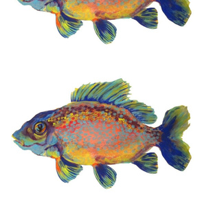 ColorfulCarp