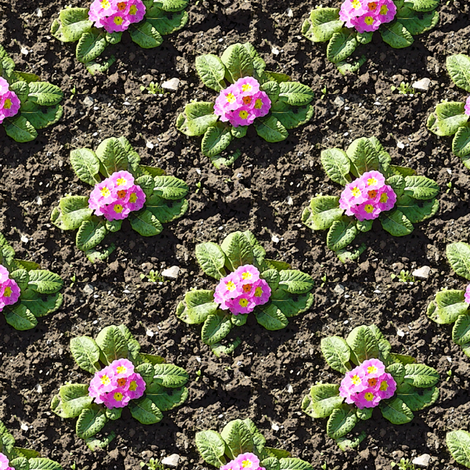 Freshly planted pink primroses fabric by bargello_stripes on Spoonflower - custom fabric