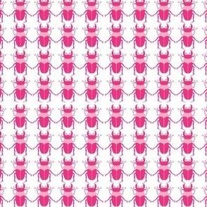 Pink_Beetle