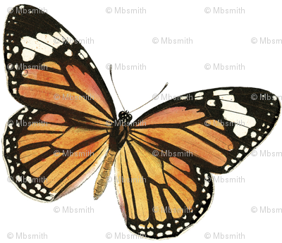 Monarch Stars