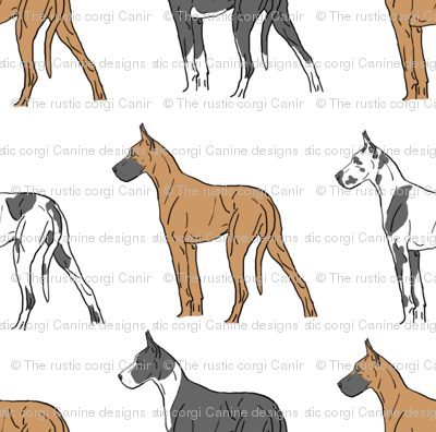 Colorful Great Danes standing tall