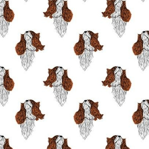 Cavalier King Charles Spaniel lightly colored sketch