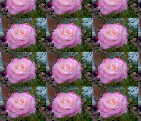Pink Rose fabric by moonduster on Spoonflower - custom fabric