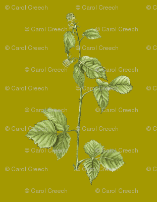 American Red Raspberry Plant - Green Background