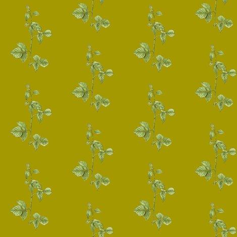 Rrrrrraspberryplant-zazzle-nosig_shop_preview