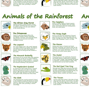 Animals of the Rainforest Panel