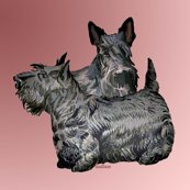 Rrscotch_terrier__shop_thumb