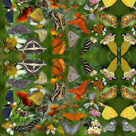Butterfly Convention fabric by eclectic_house on Spoonflower - custom fabric