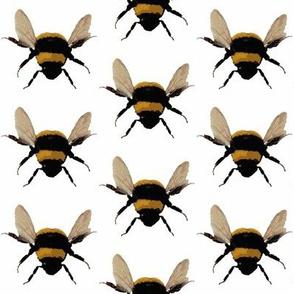 bee's on white