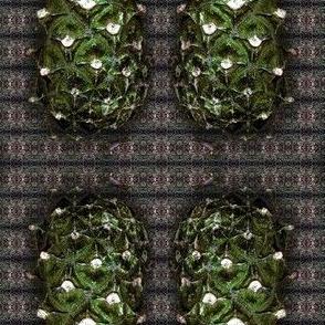 shishka pine cone by Alexandra Cook