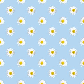 Shasta daisies -- on light blue