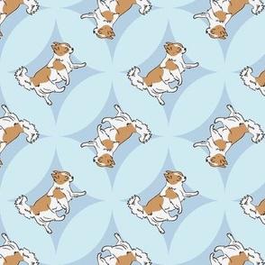 Chihuahuas trotting in blue windows