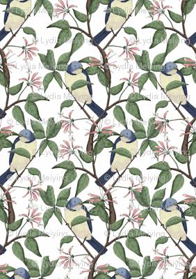 Bird Spotting (large print)